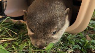 ビンゴ初めての公園ライブ(bingo Otter first live video at the park)