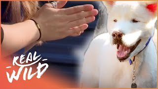 Meet Rizzler, The Dog Learning Sign Language! | Wild Things Shorts