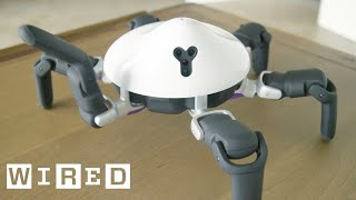 Biobots: Snakebot, Batbot, and More Robots Inspired by Nature | WIRED