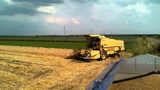 preview picture of video 'NEW HOLLAND 8060 zetva psenice 2014 (Radic,Sajkas,Serbia)'