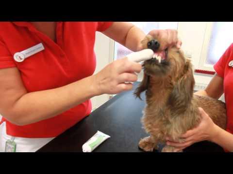 Wie geht Zähne putzen beim Hund?
