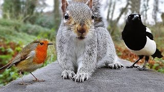 Videos for Cats to Watch - Birds and Squirrel Fun in December | Kholo.pk