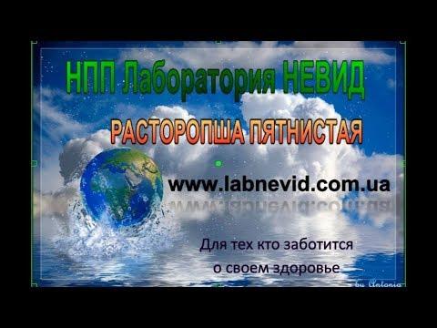 Дифференциальный диагноз гепатитов с лептоспирозом