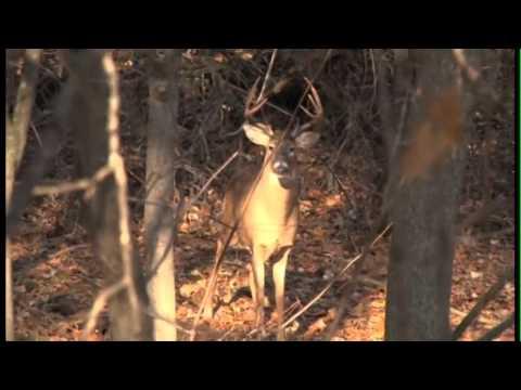 Rutting Ridge Outfitters/Buffalo County Hunting