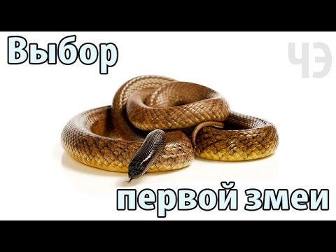 Гороскоп женщина змея телец на 2017