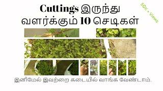 இந்த 10 செடிகளை Cuttings இல் இருந்தே வளர்க்கலாம். தெரியுமா ? | 10 Plants You Can Grow From Cuttings