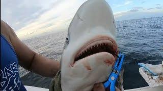 Shark Surprise Fishing Miami Waters