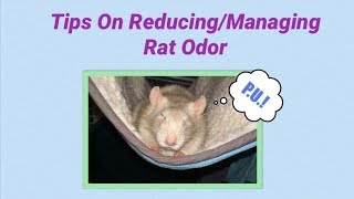 Tips & Tricks for Managing and Reducing Pet Rat Smell