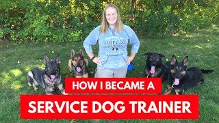 How I Became A Service Dog Trainer: My Process and Tips