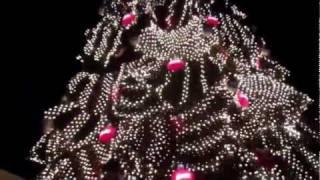 The Giant Christmas Tree, Vendors, and Evening Tacos - Iguala, Mexico