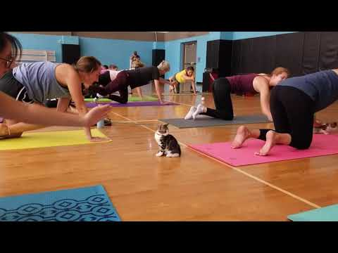 CLAWS Kitten Yoga Conway Arkansas September 15th 2019