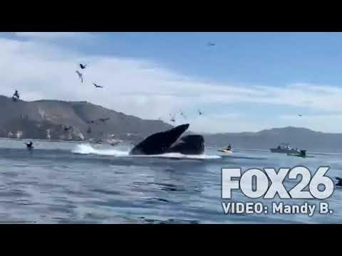 Baleia vira caiaque com duas mulheres