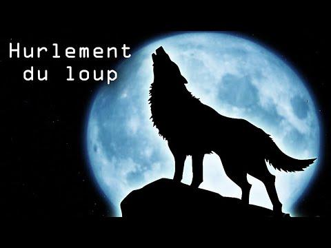 Le Loup Des Montagnes Le Vieille Homme Wattpad