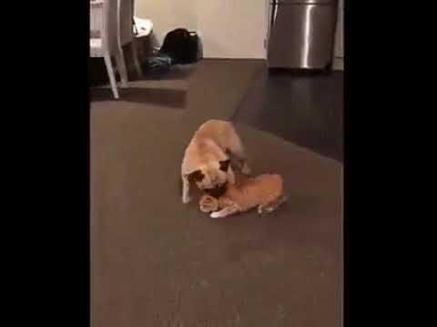 Воспитание кошки: на диван нельзя!