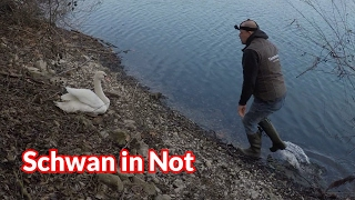 Schwan In Not   Tiernotruf #69