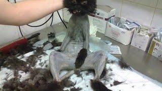 Приколы с котами Смешные приколы