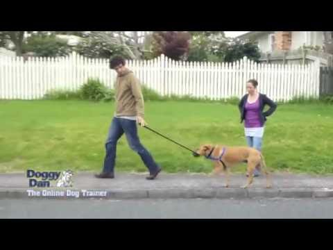 Dog Training Most POPULAR Tutorial 2016