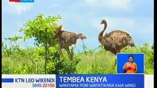 Tembea Kenya: Hewa safi ya mbuga ya Meru