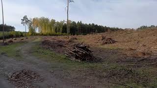 Wycinka lasów Sulęcin (okolice). Tak PiS szuka pieniędzy na swoje rozdawnictwo