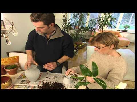 Deko Tipps: Deko aus Pflanzen, Gärtner-Tipps für das Dekorieren mit Pflanzen