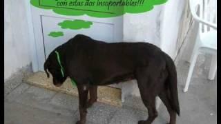 preview picture of video 'Un día de perros'