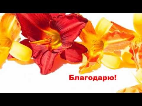 Счастье на двоих милана томаева и эльбрус кесаев текст песни