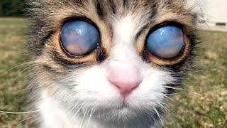 Blind Cat Has Unique Eyes