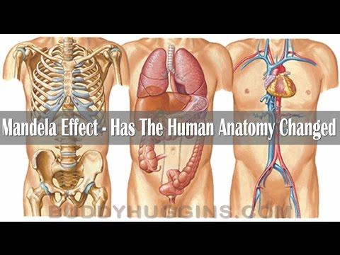 Die Osteochondrose schejnogo der Abteilung bei der Schwangerschaft das Forum als zu behandeln