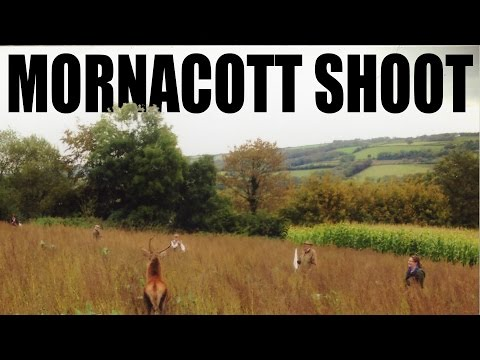 Fabulous pheasants (and deer) at Mornacott Shoot
