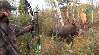 Moose Hunt With Couple Bow and Perfect Shot. HD