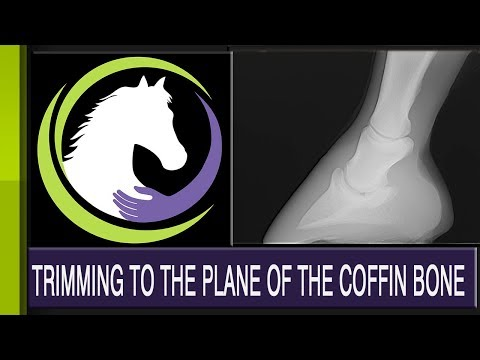 How To Trim to the Plane of the Coffin Bone (Part 2 of 2 part series)