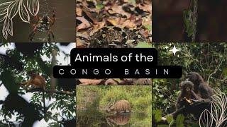 Animals of the Congo Basin