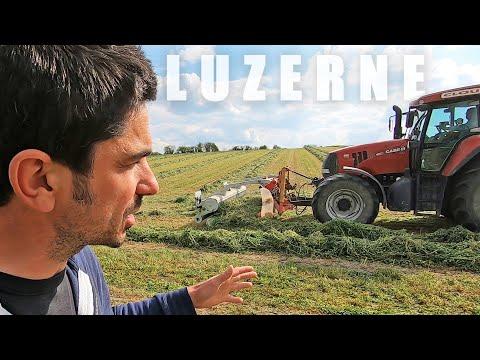 Andainage d'une luzerne chez Jean-Bernard - 2021 Andainage d'une luzerne chez Jean-Bernard - 2021