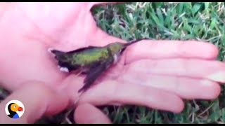 Download Youtube: Hummingbird Stuck In Gum Rescued by Kind Family | The Dodo