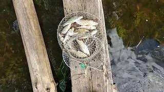 Озеро кафтино тверская область рыбалка