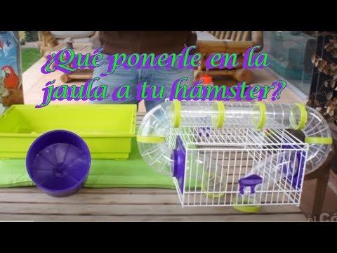 HÁMSTERS - Preparación de la jaula del hámster