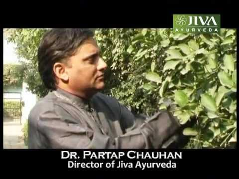 Dr Partap Chauhan-World Renowned Ayurvedacharya  , Director of Jiva Ayurveda