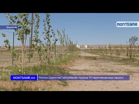 """""""Ногоон Дорноговь"""" хөтөлбөрийн хүрээнд 70 гаруй мянган мод тарьжээ"""