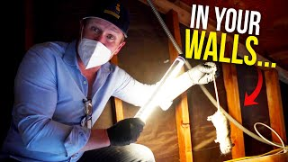 Rodents in your walls? Here's what you do.