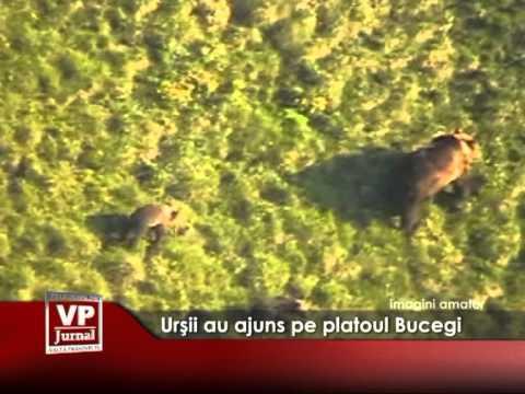 Urşii au ajuns pe platoul Bucegi