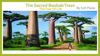 The Sacred Baobab Trees: The Tree Of Life