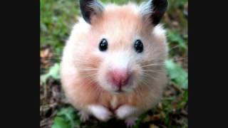 Funny And Cute Hamster Pictures