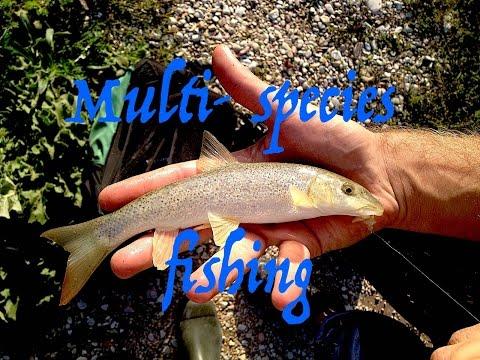 A pesca in maggio su Volga