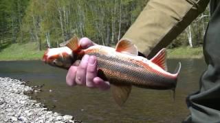 Отдых и рыбалка на горных реках приморья