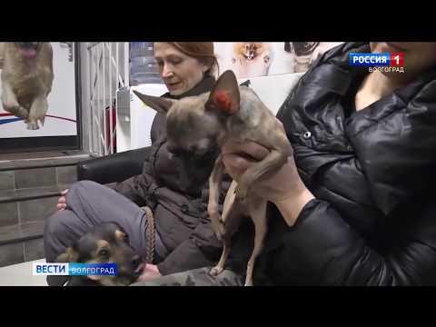 Управление Россельхознадзора контролирует условия хранения лекарственных препаратов в зоомагазинах Волгоградской области