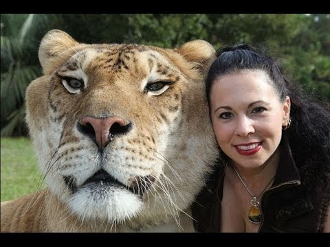 My Huge Pet Liger – Crazy Cats Compilation of Funny Pets & Funny Cat Videos