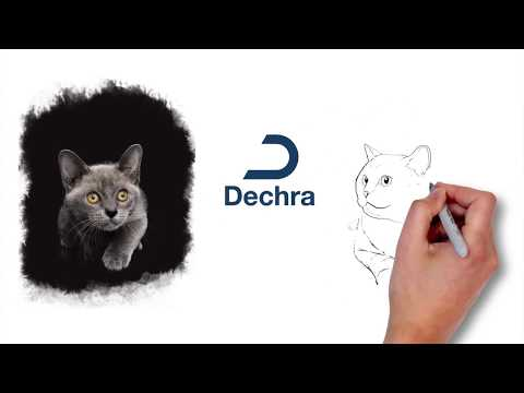 Vídeo para Videoscribing by Primera Plana para Dechra Specific