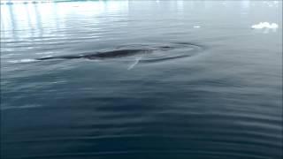 """מפגש עם לוויתן באנטארקטיקה (יח""""ץ)"""
