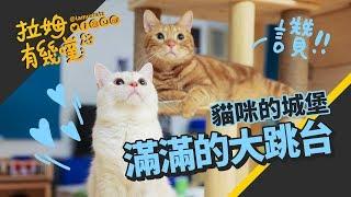 ►拉姆有幾噗◄ 貓咪們的夢想!自己建造喜歡的貓跳台┃Build your own cat tree ☁