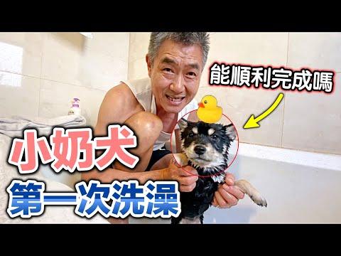 老人與狗 首次幫黑柴豆芽菜洗澡
